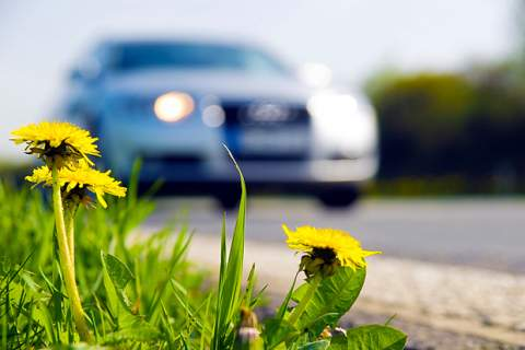 Flowers and car