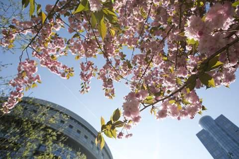 European Parliament spring