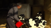 Europe's dairy crisis - farmers need more help